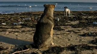 Варненци чистиха плажа и храниха лебедите