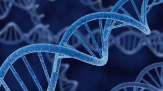 Откриха ген, удължаващ живота