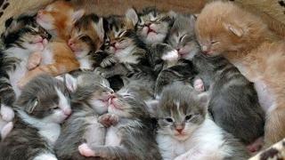 """Спасиха камион с котки в Ханой, карали ги """"на ресторант"""""""