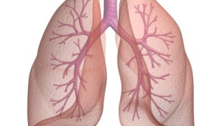 Без въздух 20 мин. и други интересни факти за белия дроб