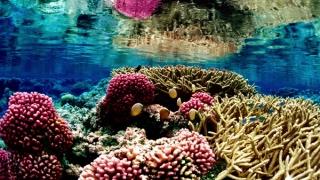 Австралия с план за опазване на Големия бариерен риф