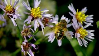 Имунитетът може да се укрепи с пчелен клей