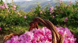 Казанлък е домакин на среща на производители на етеричномаслени култури