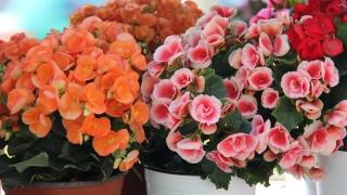 36 цветарски фирми цъфнаха на Grand Флора
