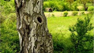 Отказвам се да покорявам Природата. Трябва ми жива (видео)