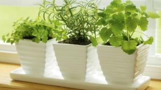 Напоителна система за стайни растения имитира природата