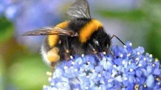 """Норвежки еколози ще правят """"зелен път"""" на пчелите през Осло"""