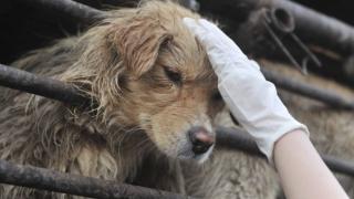 Китайка спаси живота на 100 кучета срещу 990 евро