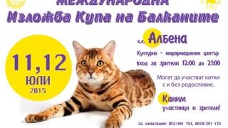 Международна изложба на котки се открива през юли в Албена