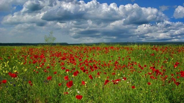 Започна петиция за опазване на дивата природа в Европа