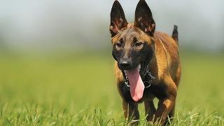 Куче от приют ще става дипломиран терапевт в Бургас