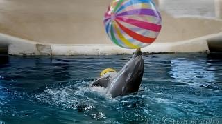 Доброволци ще изучават делфините в Черно море