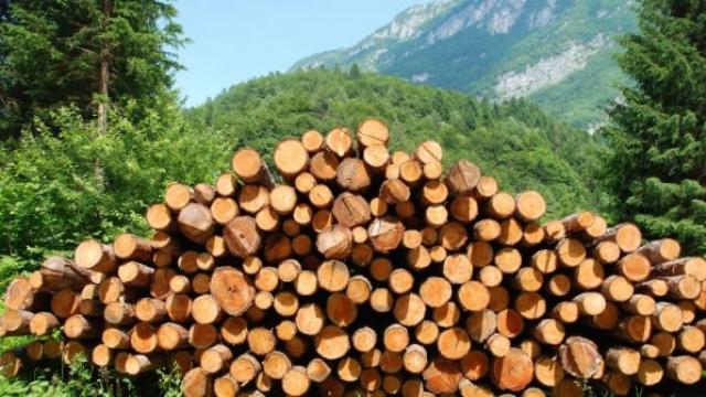 Ограничават кражбата на дървесина с GPS в камионите