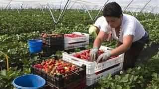 Започва наемане на работници за един ден в селското стопанство