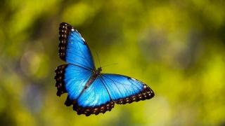Показват девет вида пеперуди от Тропиците в Бургас