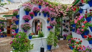 Фестивал на цветята заля с танци и музика Меделин