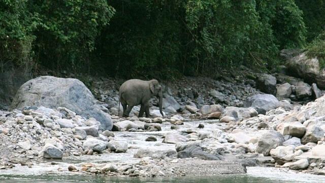 Лъвовете, слоновете и тигриге в Индия се увеличават