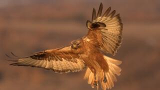 Пуснаха на свобода редки птици край София