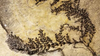 Откриха първото цвете на Земята