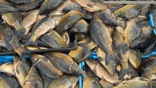 Дариха иззета риба на дом за стари хора в Тутракан