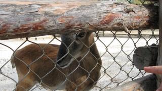 Бейби бум във Варненския зоопарк