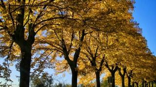 Телата ни разпознават сезоните според учени