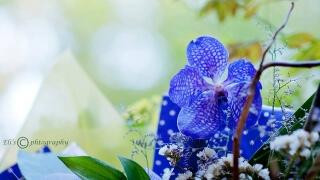"""Откриват първата есенна """"Флора"""" в Бургас"""