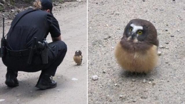 Колорадски полицай спаси бебе бухал