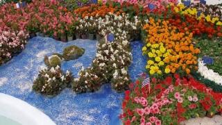 Екзотика и малко позната флора показват на изложение в Пловдив