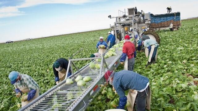 Търсят се българи за селското стопанство на Германия