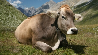 Разпределят 6 млн. евро извънредна помощ за млекопроизводителите
