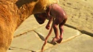 Куче спаси новородено, извади го от боклука